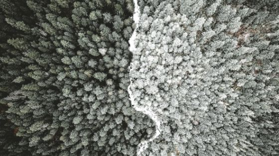 aerial photography of forest in black and white