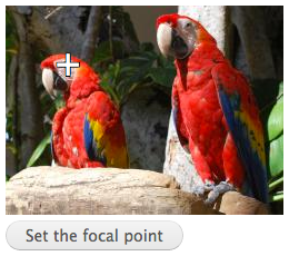 Focal Point test image with two red parrots