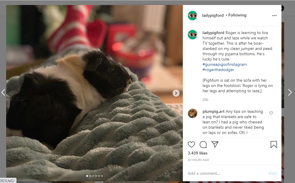 An instagram post can be seen along with its caption.