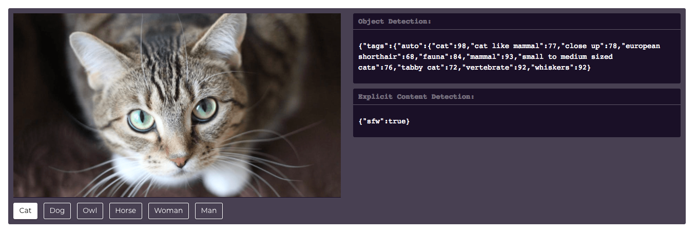Descriptive image of image tagging by filestack.com; Image of cat; Tags for cat on the right