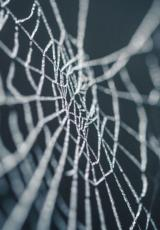 spider web against a dark background